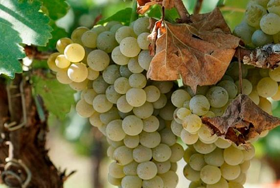 tour-di-vino
